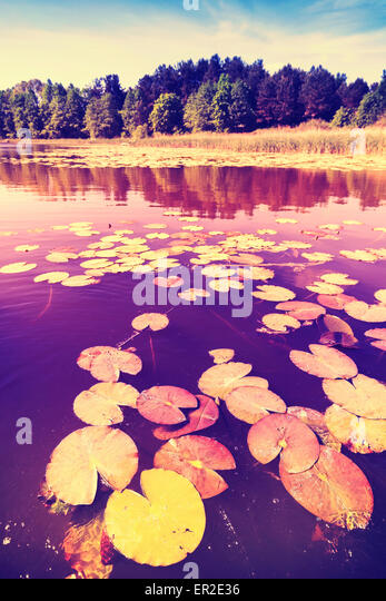 Vintage saturated picture of water lilies in a lake. - Stock-Bilder