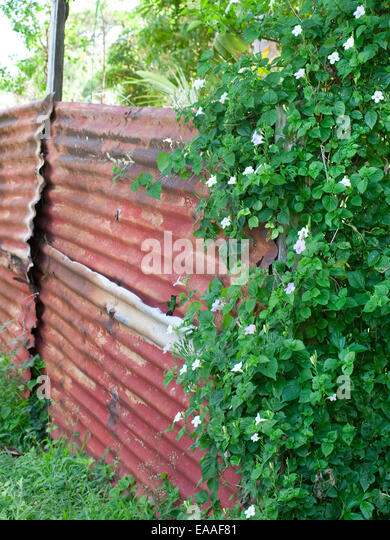 rusted corrugated garden wall in Virgin Islands - Stock Image