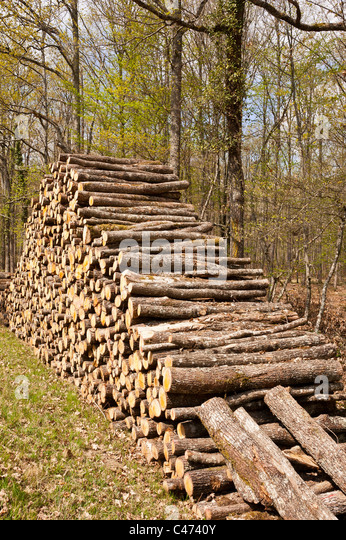 Woods stacked,  National Forest of Tronçais (03360 ), France. - Stock-Bilder