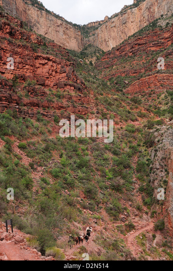 Indian Gardens along the Bright Angel trail, Colorado, United States of America, North America - Stock Image