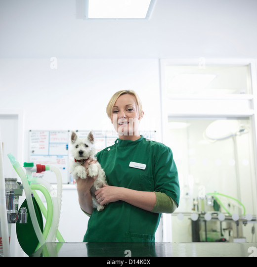 Veterinary nurse holding dog in office - Stock Image