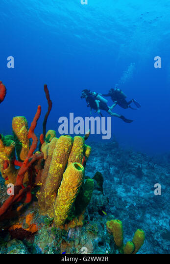 A pair of scuba divers behind a colorful outcropping of sponges. - Stock-Bilder