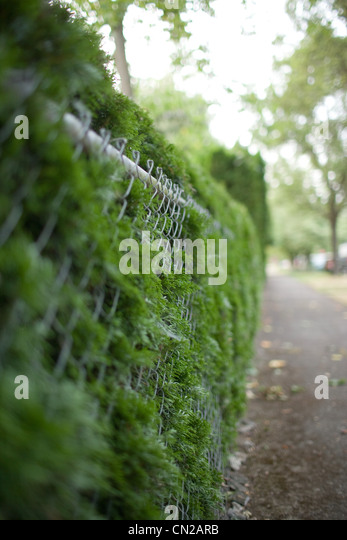 Wire fence and bushes - Stock Image