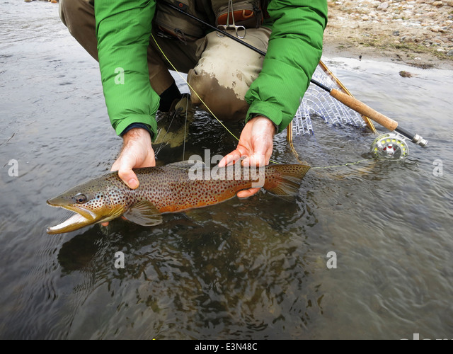 how to catch large trout