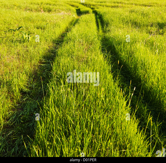Road in field meadows - Stock Image