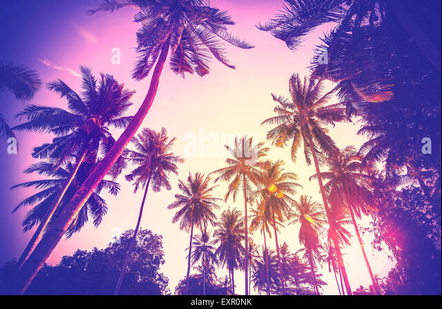 Vintage toned holiday background made of palm tree silhouettes at sunset. - Stock-Bilder