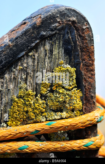 close up boat wood beach rope rotten beached lichen - Stock Image