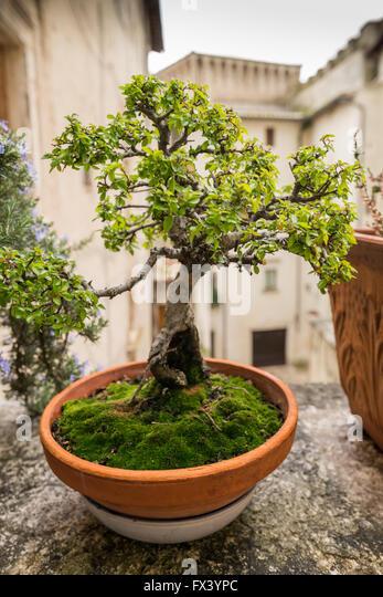 Bonsai court stock photos bonsai court stock images alamy for Bonsai italia