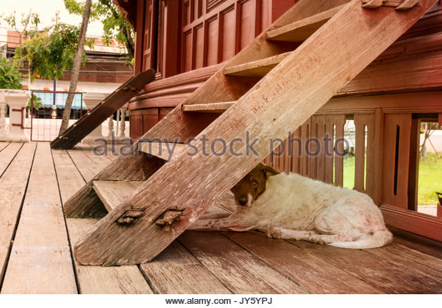 A pity dog lives under a wooden staircase. - Stock Image