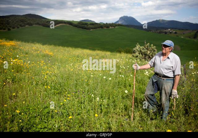 Organic farmer Diego Sanchez walks in his organic farm in Prado del Rey, Cadiz, Andalusia, Spain - Stock Image