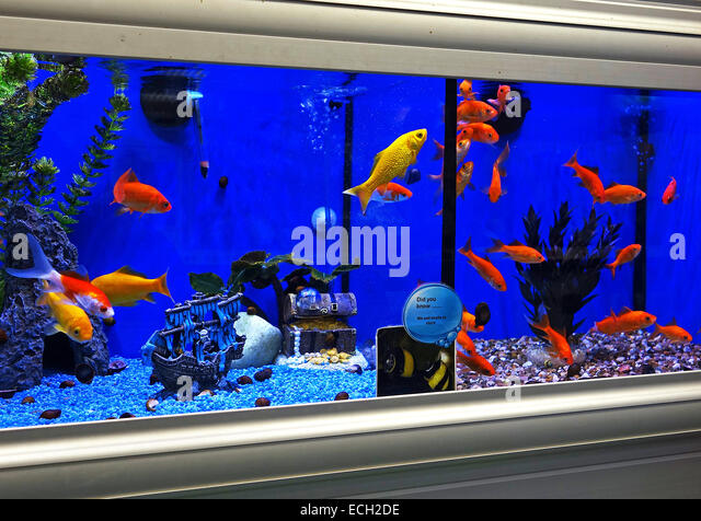 Fish tank pet stock photos fish tank pet stock images for Tropical fish shop