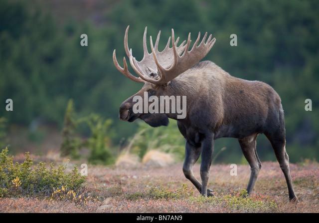 Moose Pass Stock Photos & Moose Pass Stock Images