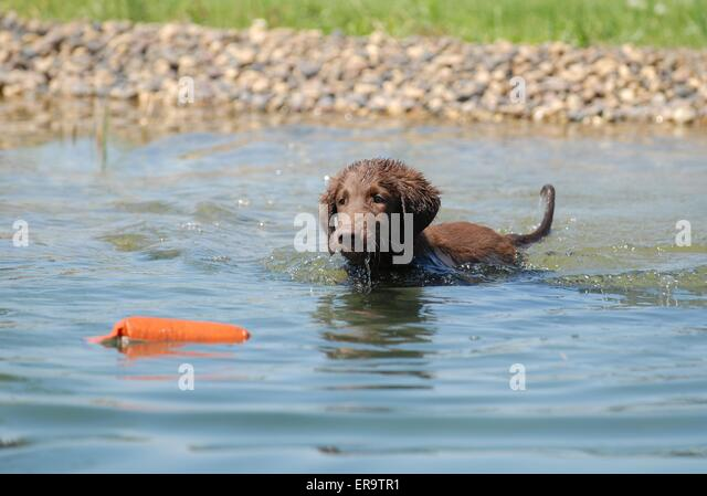 Dog Training Budleigh Salterton
