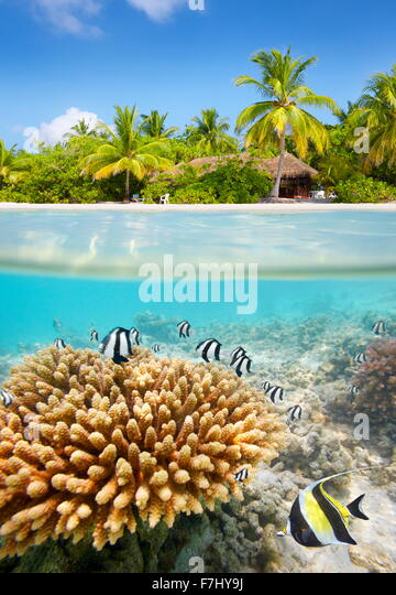 Tropical beach and underwater view with reef and fish, Maldives Island - Stock Image