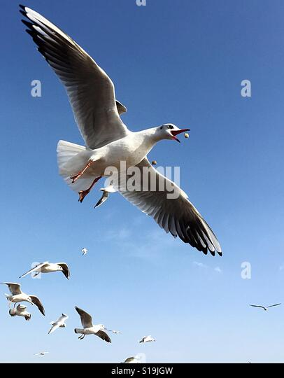 seagulls trying to capture their food - Stock-Bilder