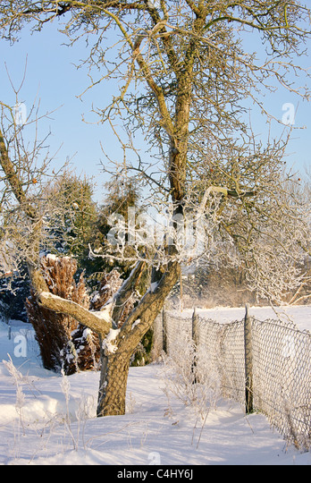 Garten Im Winter apple tree winter garden stock photos apple tree winter garden