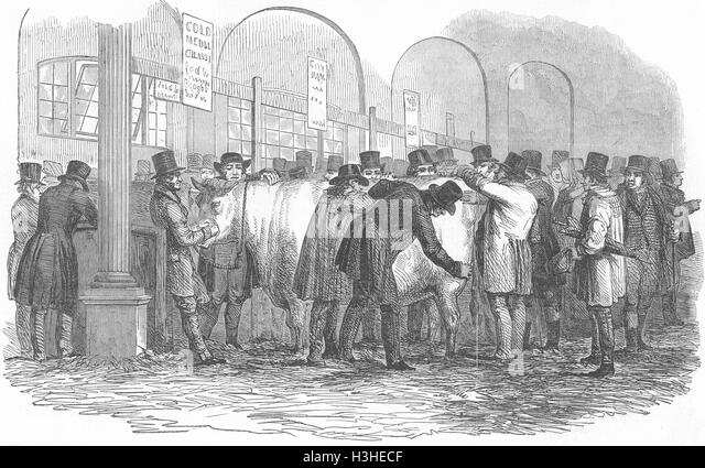 LONDON Smithfield cows show 1848. Illustrated London News - Stock Image