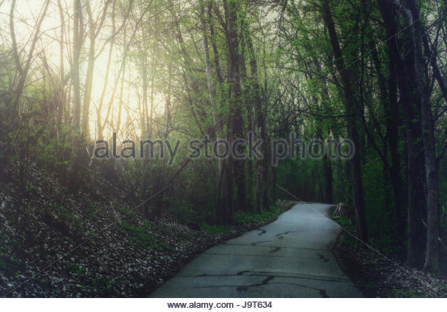 Dark path in the woods at dusk - Stock Image