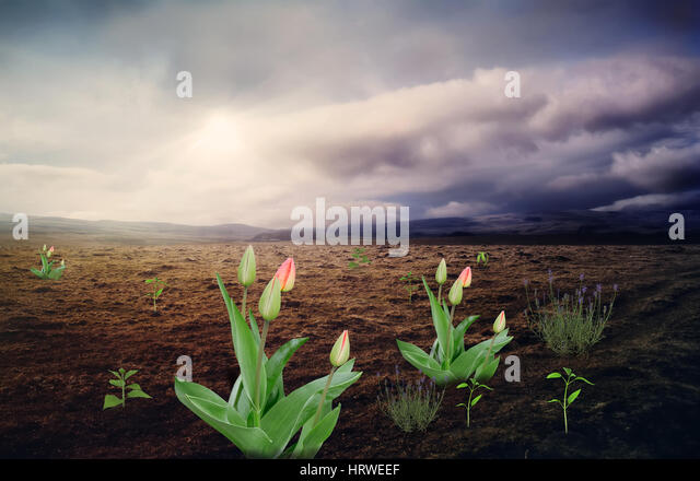 The surreal landscape : in a large mountain valley with uncultivated land punched flowers and plants at the stormy - Stock Image