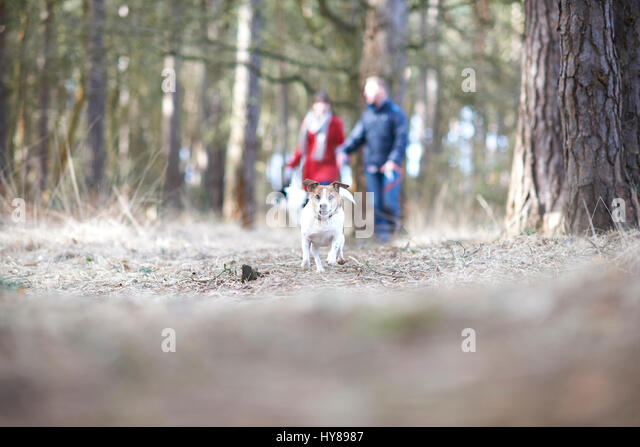 A young couple walk their two dogs in the woods - Stock Image
