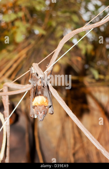 angelika swinger frauen muschi lecken