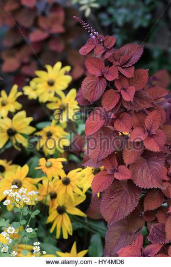 gartenblumen stock photos gartenblumen stock images alamy. Black Bedroom Furniture Sets. Home Design Ideas