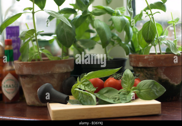 Herbs pots stock photos herbs pots stock images alamy Kitchen windowsill herb pots