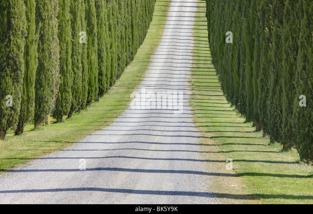 Abstract view of cypress trees and their shadows across gravel road, near Pienza, Tuscany, Italy, Europe - Stock-Bilder