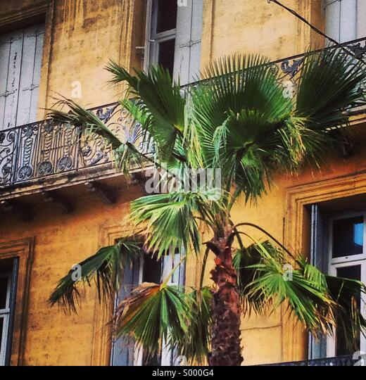 Palm tree on the streets in Montpellier, Southern France - Stock Image