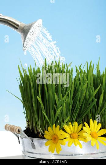 gut wässern - Stock Image