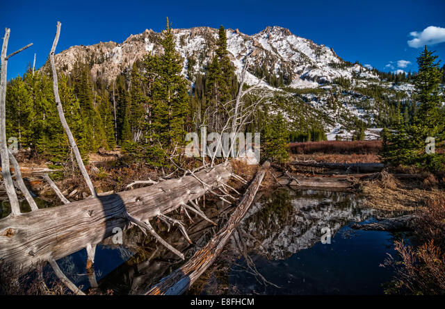 USA, Idaho, Sawtooth Wilderness, Log in forest - Stock Image