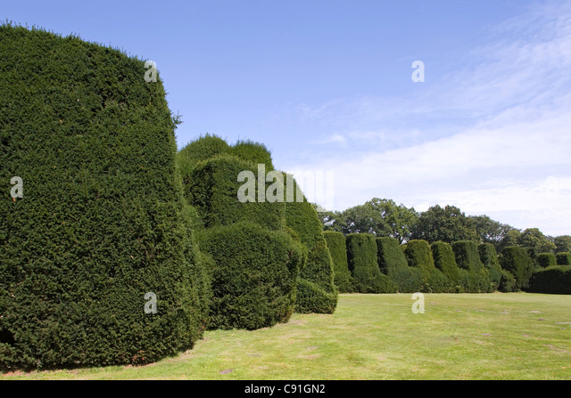 Trimmed yew hedges in the garden of Gut Altenkamp, Papenburg, Lower Saxony, northern Germany - Stock Image