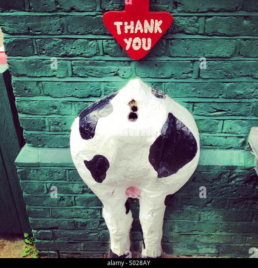 Cows bottom donation box - Stock Image