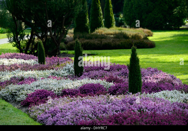 Erica carnea stock photos erica carnea stock images alamy for Low growing plants for flower beds