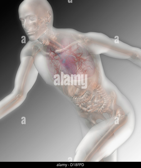 Illustration of a running male anatomical model - Stock Image