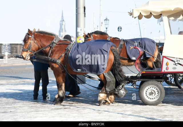 Tourist horse and cart, with automatic dung collector. - Stock Image