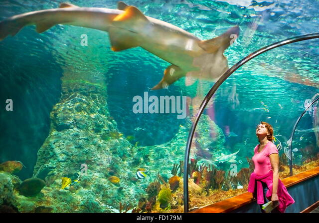 Tourist looking at shark, Loro Parque, Tenerife, Canary Islands, Spain - Stock Image