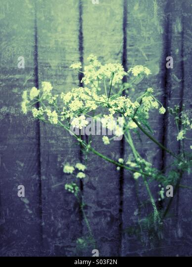 Wild flowers against fence - Stock-Bilder
