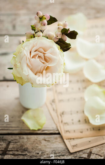 single ivory rose with snowberries and music paper in the background - Stock-Bilder