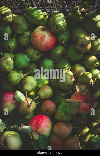 Green pears and apples harvest - Stock Image