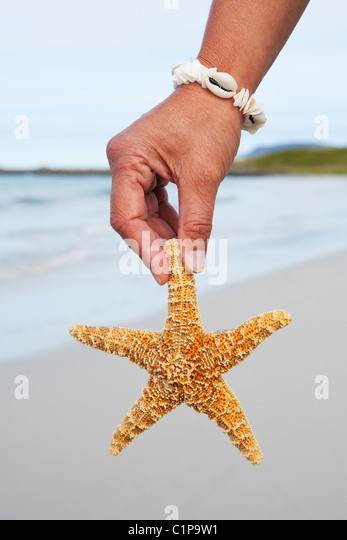 Persons hand holding starfish on beach - Stock Image