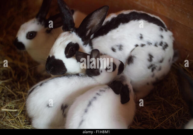 Rabbits Group Stock Photos & Rabbits Group Stock Images ...