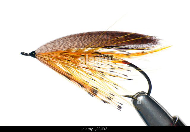 Lure feathers stock photos lure feathers stock images for Fly fishing shows