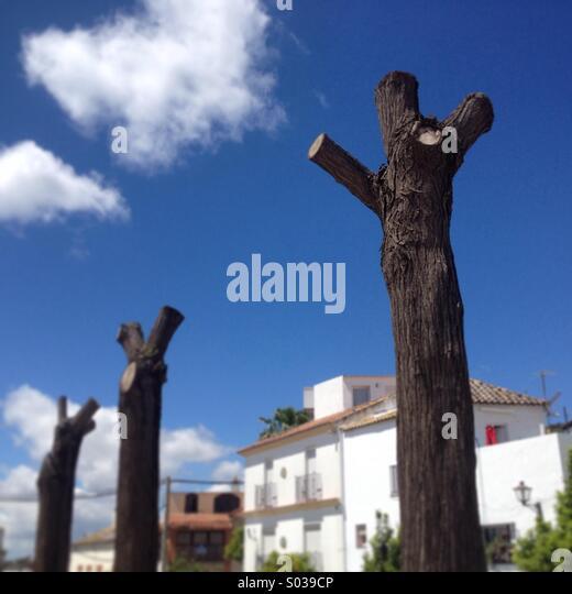 Desertification deforestation stock photos - Tiempo en prado del rey cadiz ...