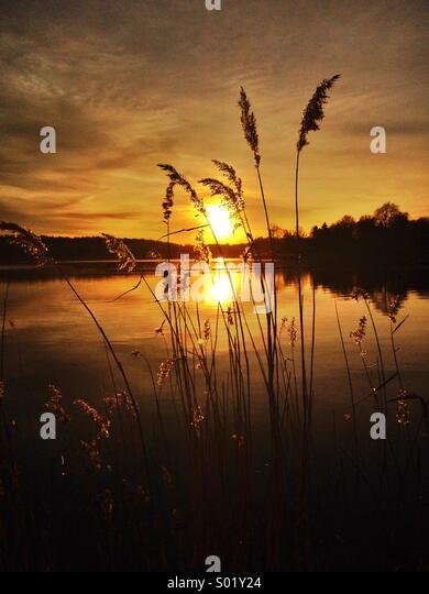 Catching the sunset over Edsviken,Sweden - Stock Image