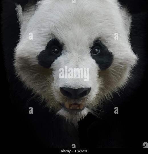 Digital Painting of Giant Panda Bear on Black Background - Stock Image