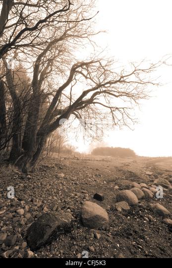 Trees in mist at the island Jeløy in Moss kommune, Østfold fylke, Norway. - Stock-Bilder
