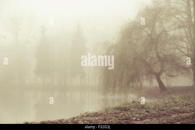 Foggy moring in peaceful area - Stock Image