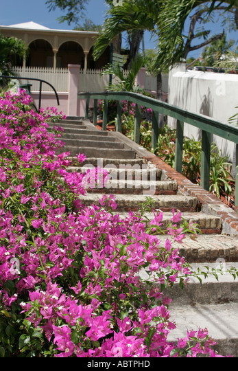 St. Thomas USVI Charlotte Amalie Blackbeard's Hill 99 Steps Villa Notman built 1860 Bougainvillea flowers - Stock Image