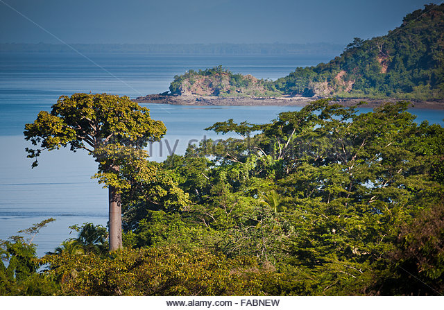 Rain forest at Punta Patino nature reserve, Republic of Panama. - Stock-Bilder